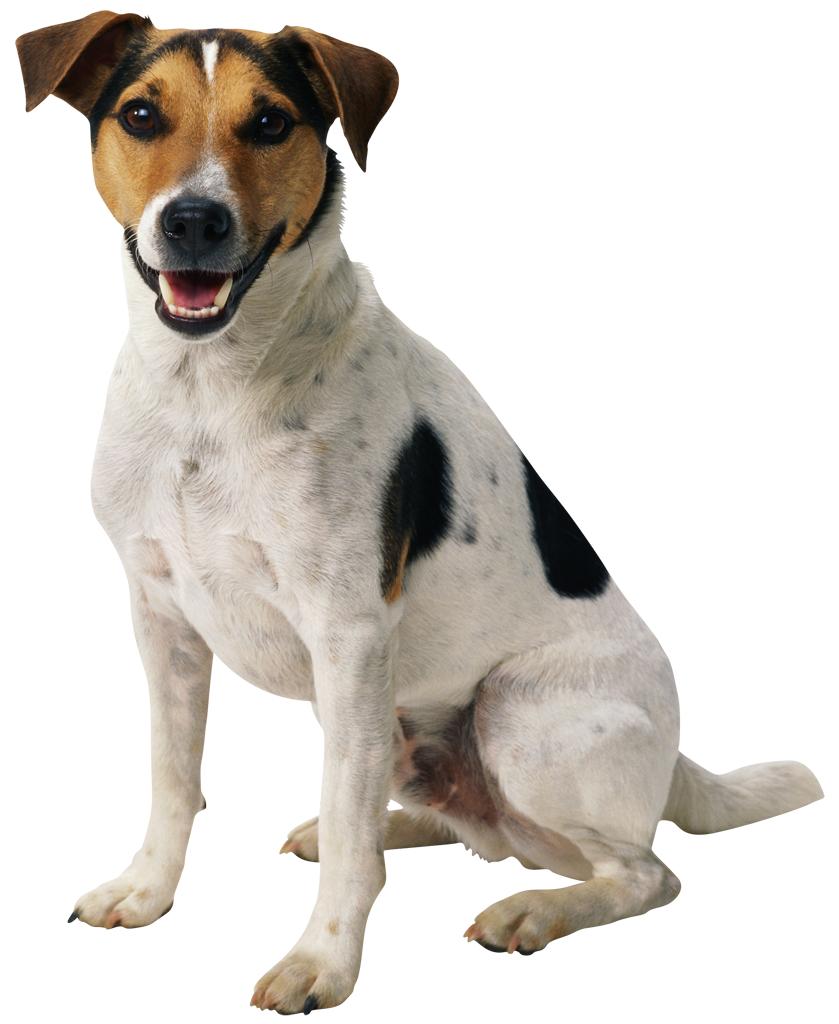 dog-png-16