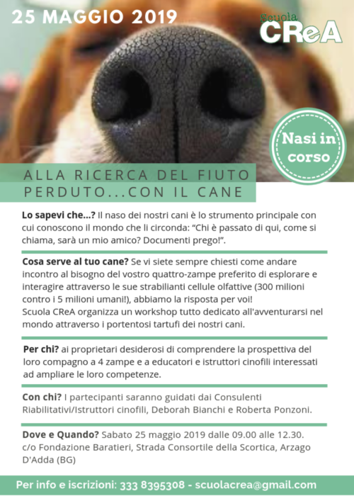 loc-nasi-in-corso_2019
