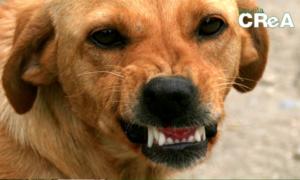 il mio cane è aggressivo