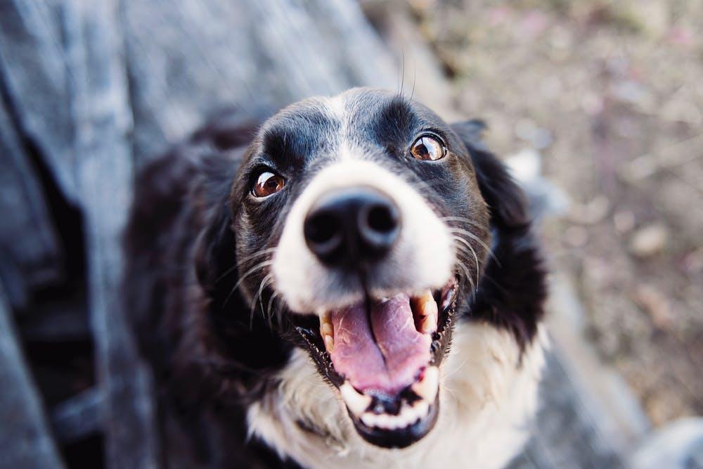 Come scegliere quali giochi comprare per il cane?